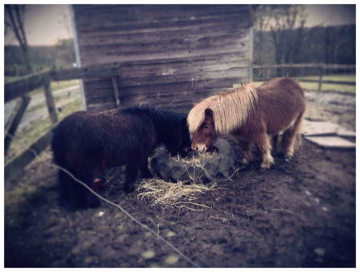 meine Ponys ?❤️ Pony Pferde