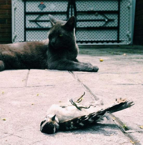 Cat Birds Dead Check This Out Outside Taking Photos Day Hello World Hi! Food