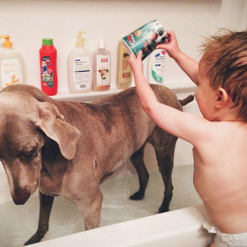 Baby boy washing his dog