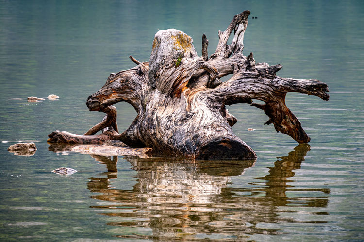 Driftwood on tree trunk by lake