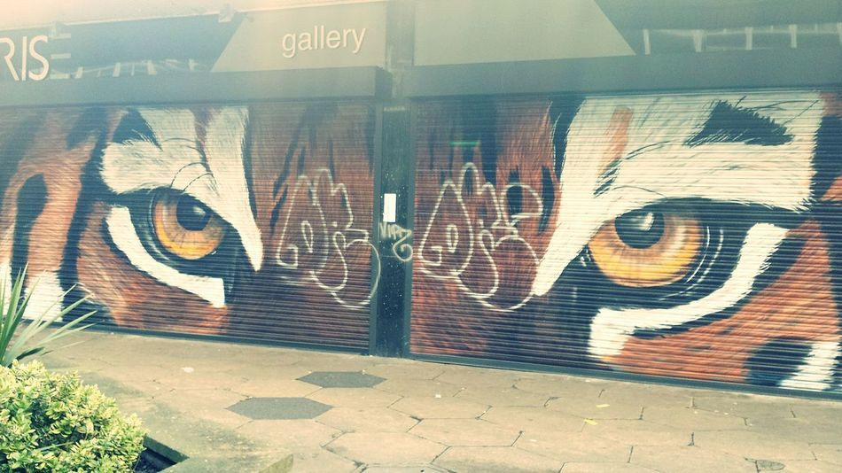The Changing City Street Art Tagged Defaced Beautiful View Beautiful Big Cats Bright_and_bold EyeEm Gallery