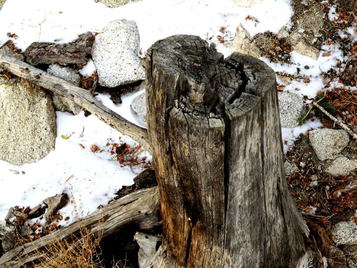 Winter Snow Dead Tree Draught Tree Stump Park California Walking Around Palm Springs Aerial Tramway