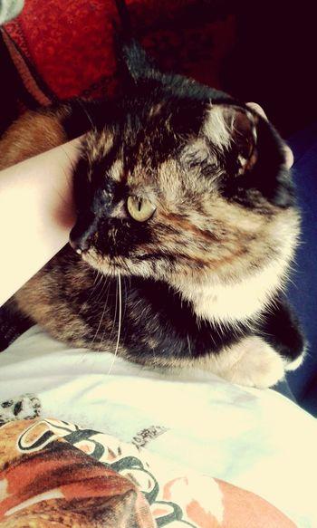 My cat,lovecats! ))))
