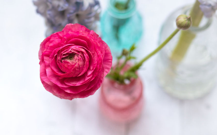 Flower Flowering Plant Plant Beauty In Nature Vulnerability  Fragility Close-up Freshness Petal Flower Head Focus On Foreground Inflorescence Nature No People Indoors  Pink Color Red Vase Flower Arrangement Bouquet Ranunculus EyeEm Nature Lover EyeEm Gallery StillLifePhotography Still Life