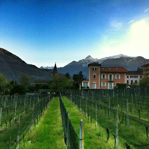 Bellinzona Villa Dei Cedri Morning Ticino Switzerland Landscape_Collection Mountain View Vineyard