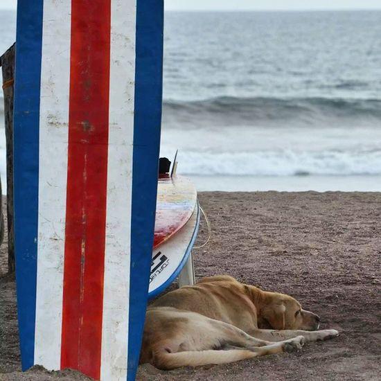 Merecido descanso JacoBeach Jaco  Costaricagram Costarica puravida playa dog picoftheday surf