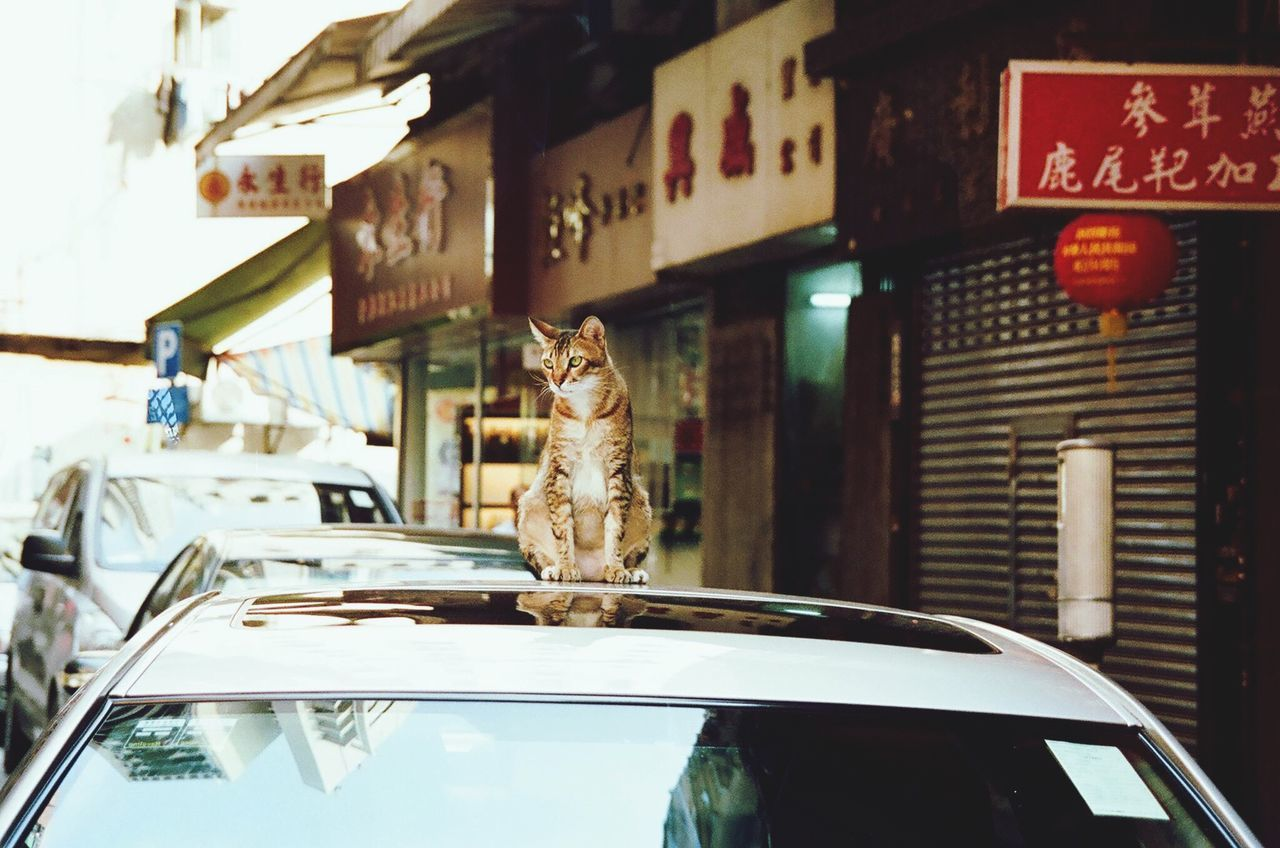 Cat On Car Roof By Stores
