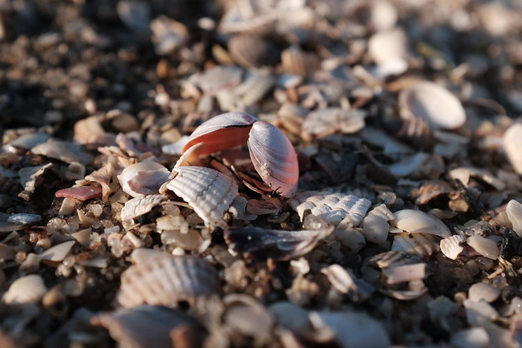 Abundance Animal Shell Beauty In Nature Close-up Day Fragility Gastropod Large Group Of Objects Leaves Nature No People Outdoors Seashell Selective Focus Shell Surface Level Tranquility Zoology