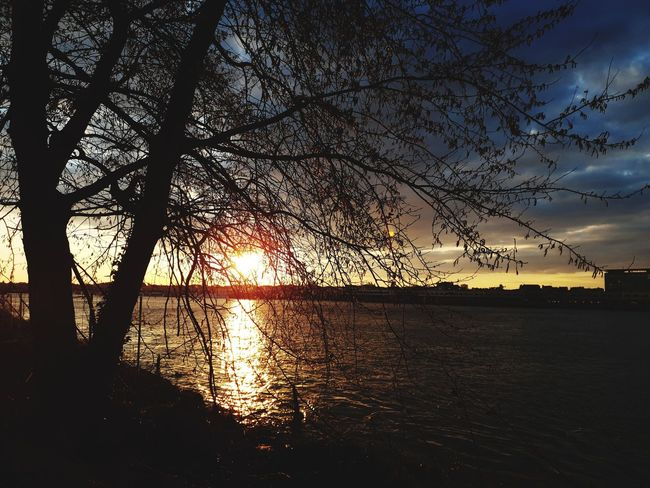 From My Window Silhouette_collection Cityscape Tree Water Sunset Silhouette Reflection Sky Dramatic Sky Stories From The City