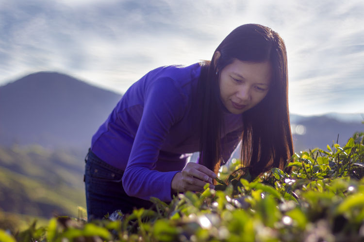 Asian  Woman Picking Fresh Tea Leaves In a Plantation on Highlands Morning Sky Harvest Clouds Agriculture Landscape Happy Smile Beauty Nature Mountain Casual Tropical Purple Outdoors Feel The Journey Original Experiences