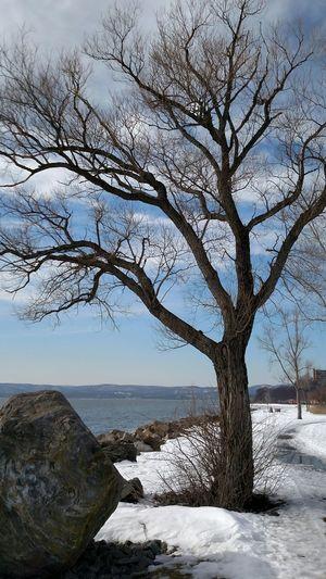 Bare trees by calm sea