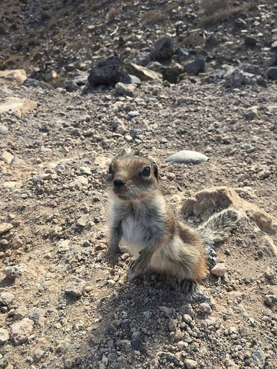 Animals In The Wild Animal Themes Animal Wildlife Nature One Animal Day Mammal Outdoors Meerkat No People Squirrel Close-up Photography Photo