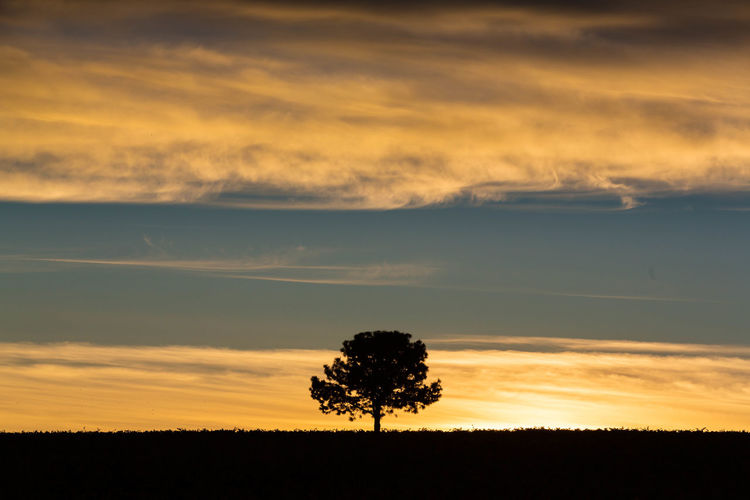 Sky Cloud - Sky Beauty In Nature Tranquility Tranquil Scene Tree Silhouette Scenics - Nature Romantic Sky Outdoors Non-urban Scene No People Idyllic Land Nature Environment Field Landscape Plant Orange Color Farm Sunrise Sunset