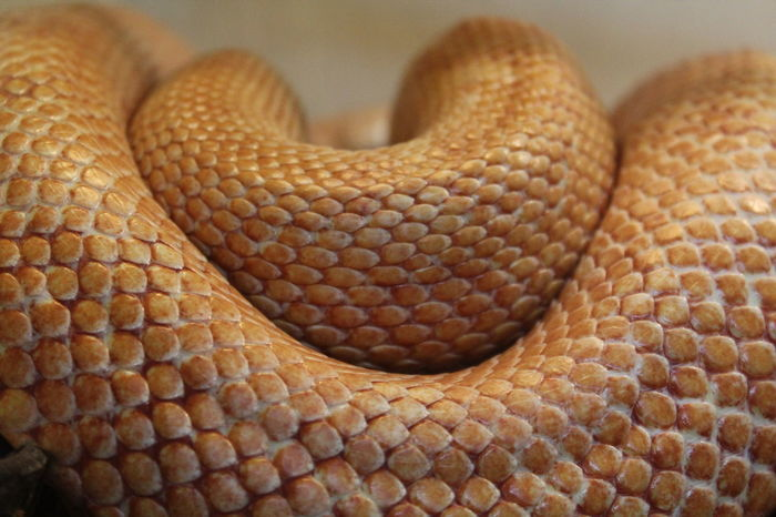 Close-up EyeEm Animal Lover Eyem Macro Macro Macro Animal Macro Beauty Macro Photography Makro Makro Photography No People Reptile Reptile Photography Reptiles Schlange  Schlangen Snake Snakes