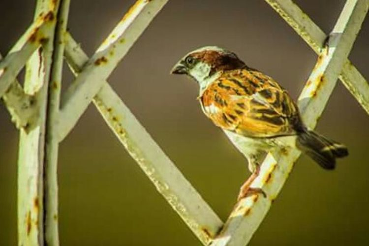 Sparrow Bird Birds Beautiful Sexyphotos Allaw Capture The Moment Art