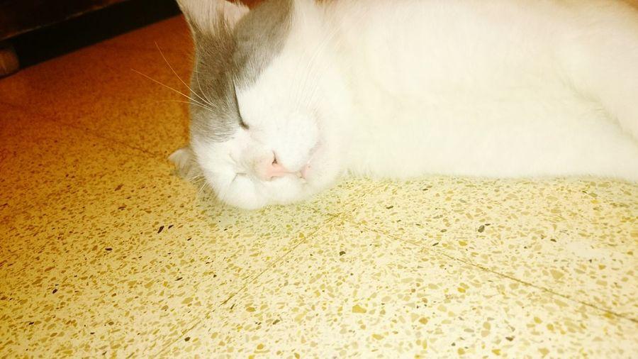 Mars Sleeping Cat Chatquifaitdodo Calm Peace ✌