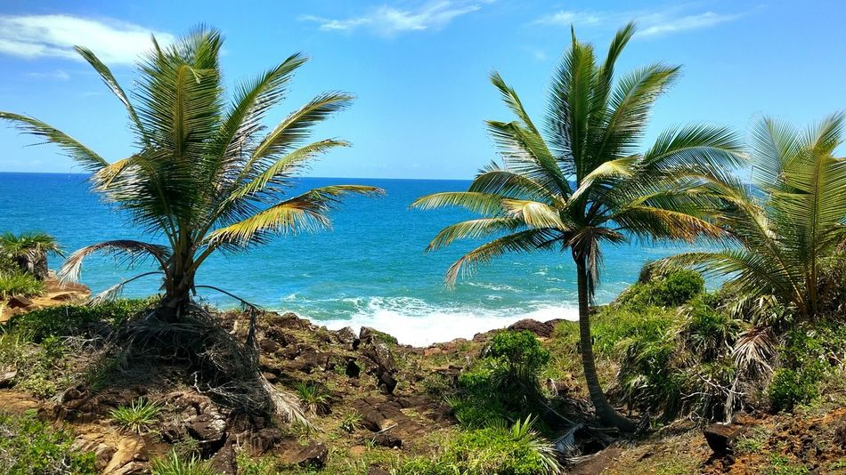 Beach Palm Tree Tree Blue Growth Sky Nature Sea Outdoors No People Scenics Clear Sky Day Beauty In Nature First Eyeem Photo Brazil Brasil Praia Bahia Bahia/brazil Bahia/brasil Coqueiros