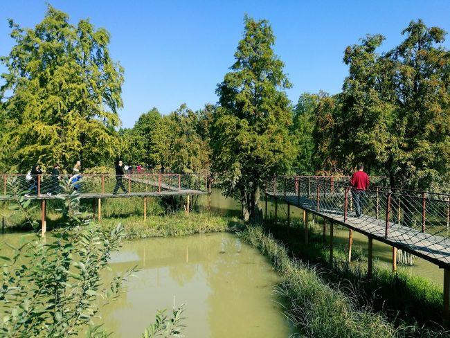 Tree Water Footbridge