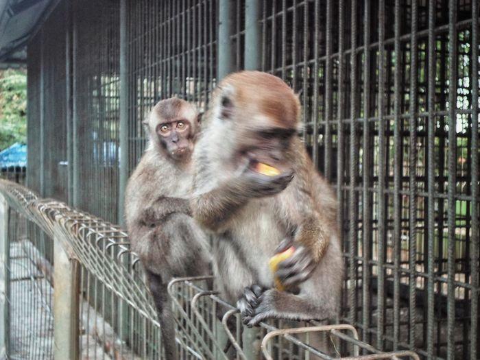 Monkey Animal Themes Looking At Camera Animal Wildlife Animals In Captivity No People Day