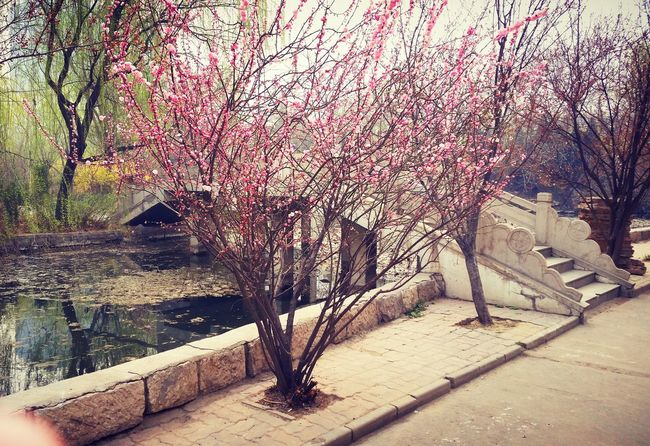 Spring Warm Day Bloom Trees EyeEm Nature Lover China