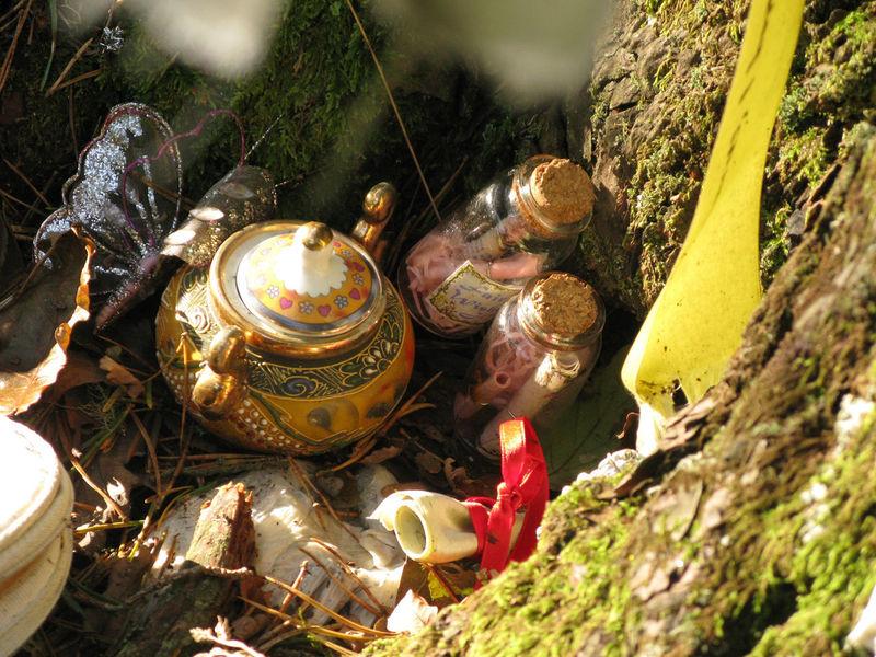 Tea set at the Fairy Tree in Aberfoyle Aberfoyle Bark Fairy Fairy Tree Inanimate Objects Offering Ornaments Scotland Scottish Shrine Sunlight Tea Pot Tree Vials Votive Hidden Gems