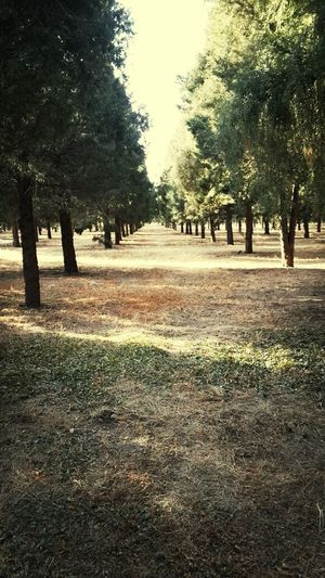 ...juniper grove. temple of heaven Taking Photos Check This Out Hello World Starting A Trip