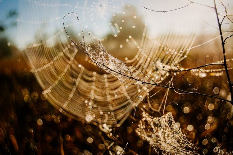 Close-Up Of Spider Web On Dry Plant