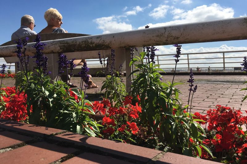 Hull People Hull Pier Railing Bench In Bloom Hull City Of Culture 2017 Hull2017