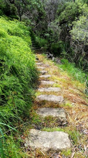 Pathway Nature EyeEm Nature Lover Nature Photography Grass Plants Rocks Stone Stone Pavement Hiking Bushes Hiking Trail Trail Greenery Green Nature_collection Follow The Path