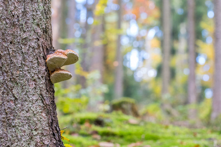 Beauty In Nature Close-up Day Focus On Foreground Fungus Growth Mushroom Nature No People Outdoors Tree Tree Trunk