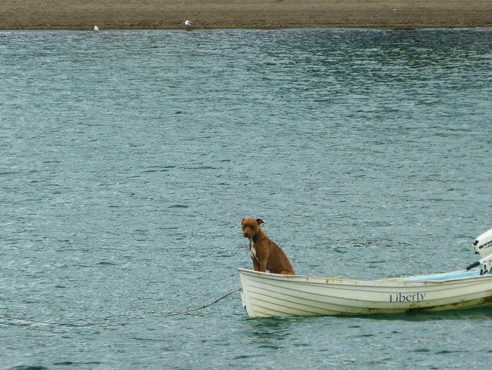 Alone Alone Time Boat Boat Dog Dinghy Dog Dog In A Boat Sad Dog Water Showcase July 2016 Showcase July