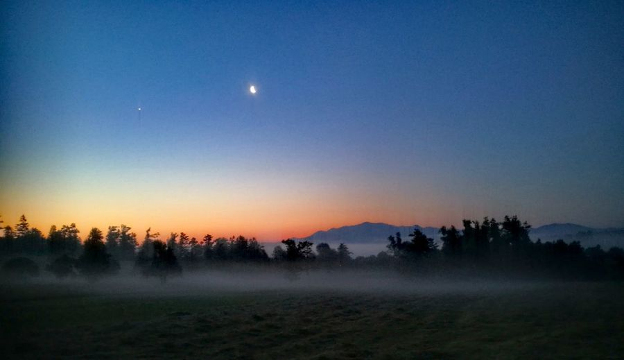 Early morning dew Moon Tree Beauty In Nature Nature Landscape Night Sky Tranquil Scene Scenics Fog Tranquility Outdoors Forest No People Early Morning Sky Driving To Work Drivingshots Job Of The Day Early Morning Outdoors Photograpghy  Day Tranquility Sunrise Cloud - Sky Dramatic Sky