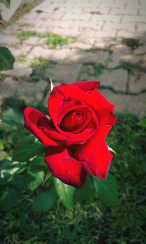 çiçek çiçeklerböcekler Flowers Roses Nice Day Nice Nice Pic