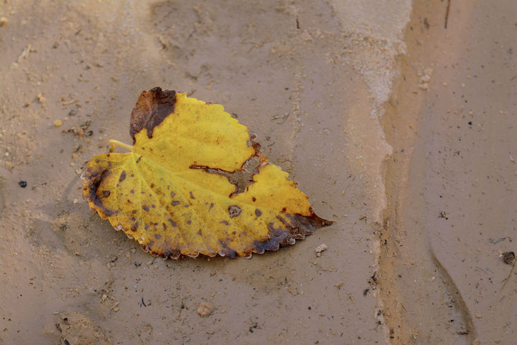 High angle view of yellow leaf on beach