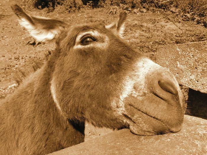 Donkey wall