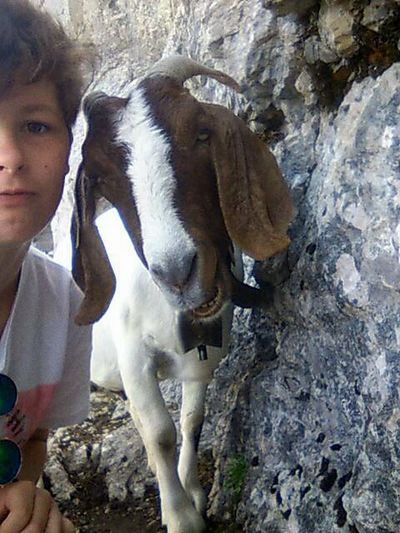 Goat Love <3