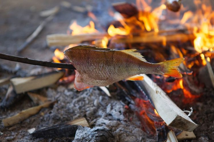 Fish being roasted on bonfire