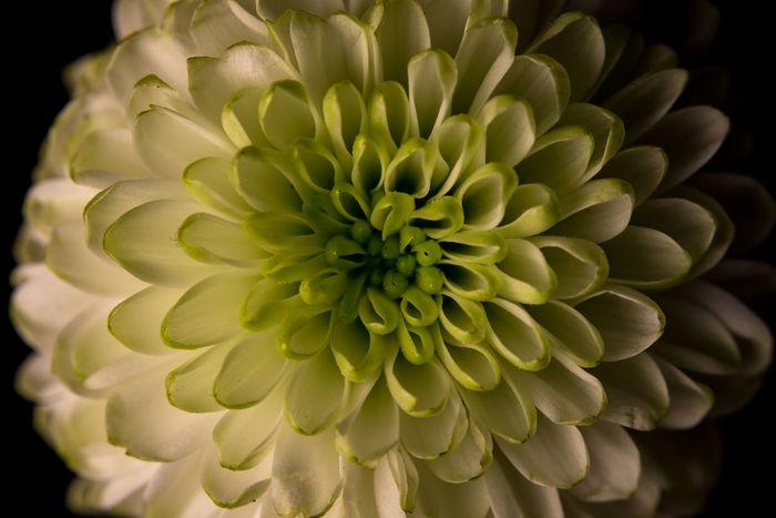 Close-up Close Up Closeup Macro Macrophotography Flower Flower Head Plant Nature Floral Petal