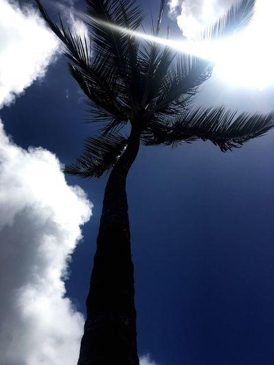 Kauai Palm Trees Kukui Grove Starbucks Sunshine ☀