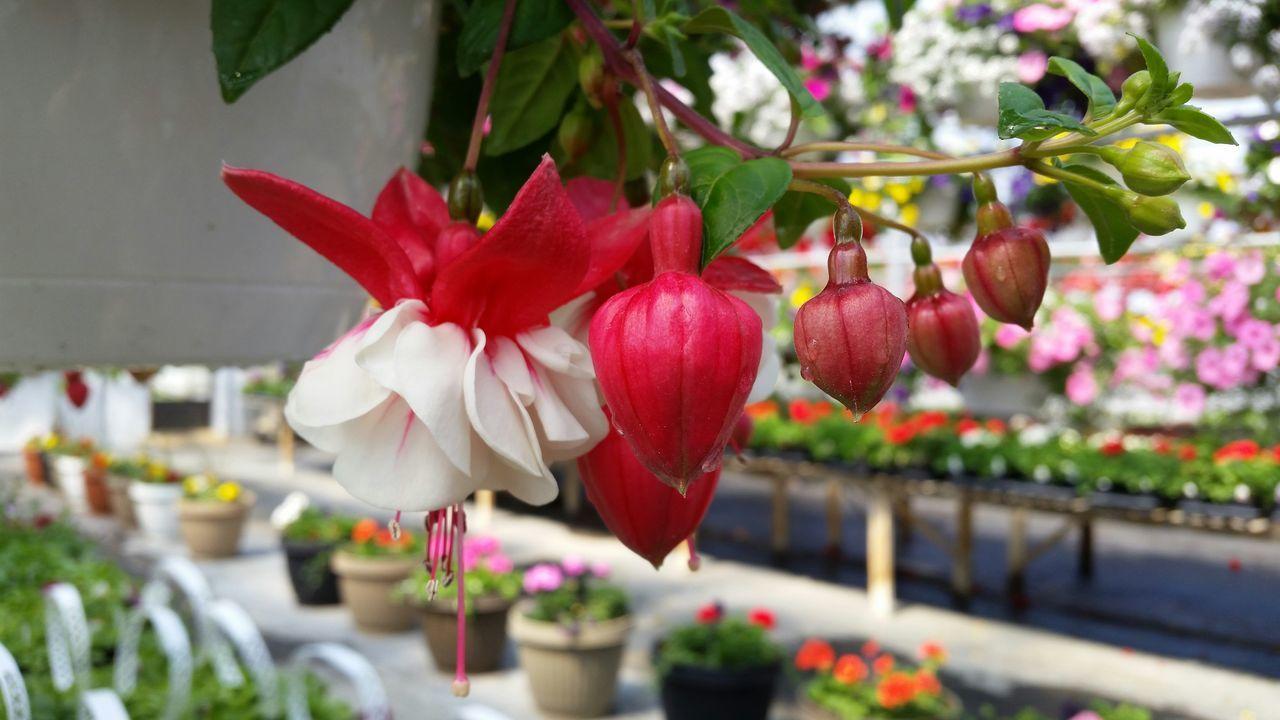 Close-Up Of Flower Buds