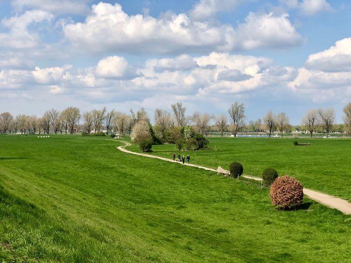 Spring breeze over the green Springtime Riverside Düsseldorf Plant Cloud - Sky Sky Grass Green Color Nature Field Beauty In Nature Landscape Scenics - Nature Outdoors Rural Scene