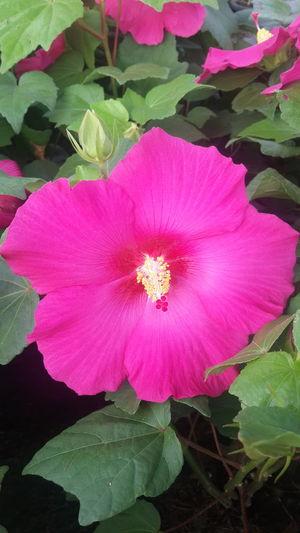 ดอกแดง Flower Flower Head Pink Color Petal Beauty In Nature Nature Freshness Plant Fragility No People Orchid Outdoors Day Close-up