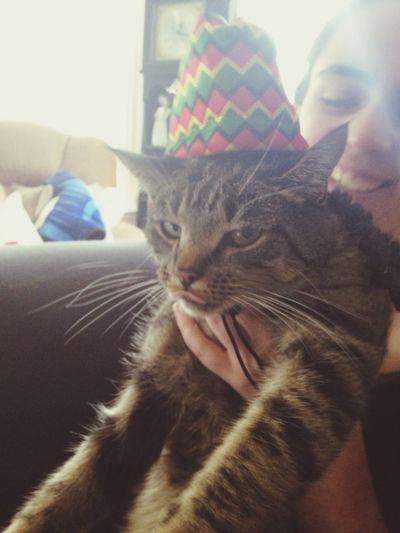 Bobmarley Kitty