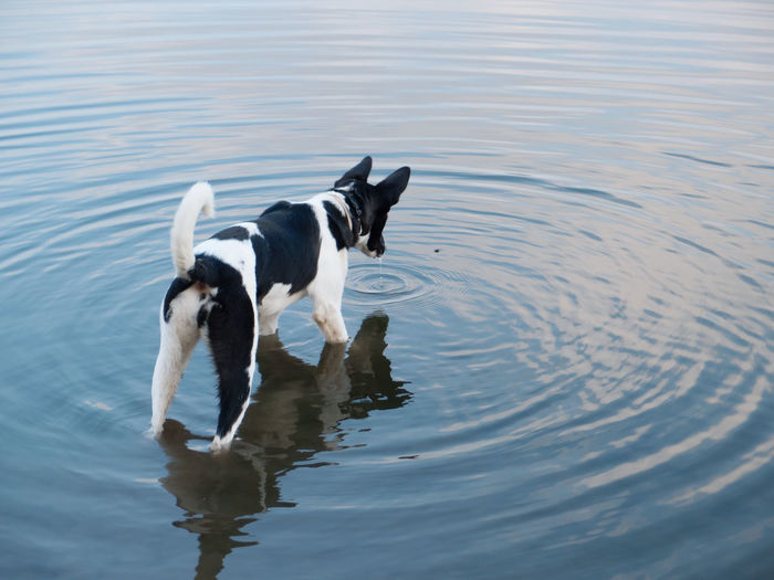 The dog looks at the bee falling into the water Autumn Pet Portraits Animal Themes Bee Blue Day Dog Domestic Animals Nature No People Outdoors Pets Reflection Water Waterfront Waves