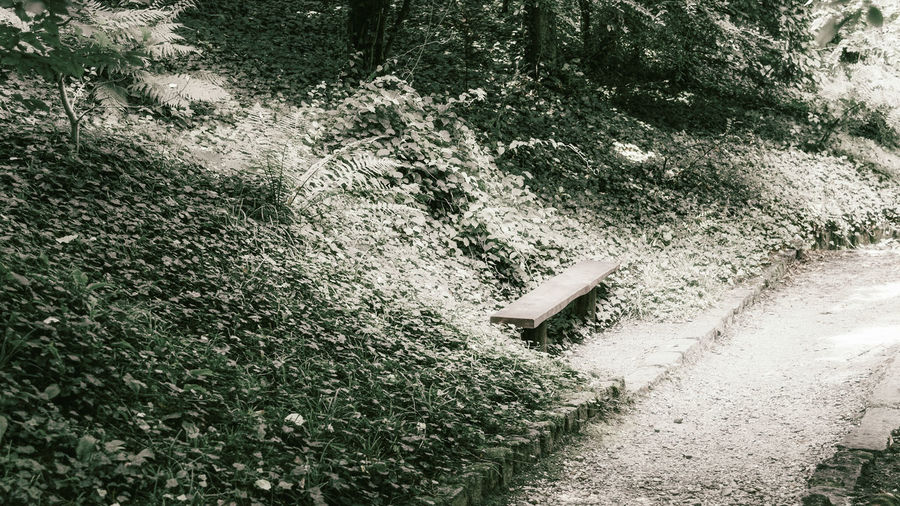 High angle view of water drops on footpath in forest