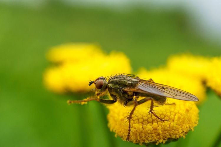 Wipe those paws sweetie Insects  Insect Macro Flower Flowers Nature Fly Beauty Bokeh First Eyeem Photo