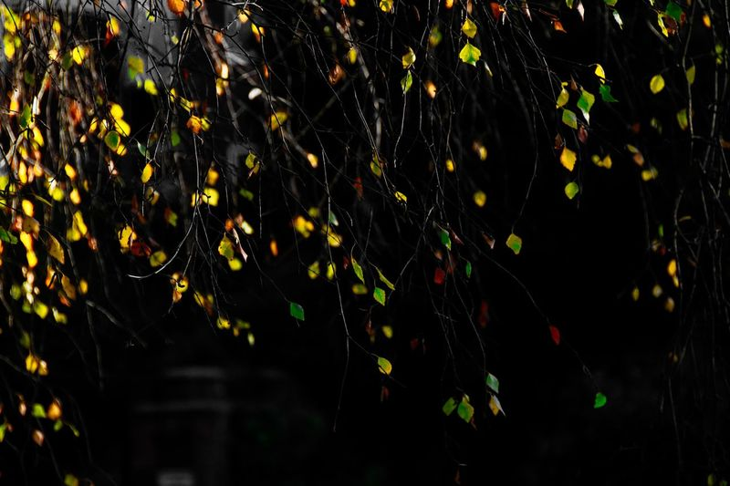 Night Illuminated No People Nature Yellow Celebration Motion Outdoors Pattern Close-up Multi Colored Beauty In Nature Decoration
