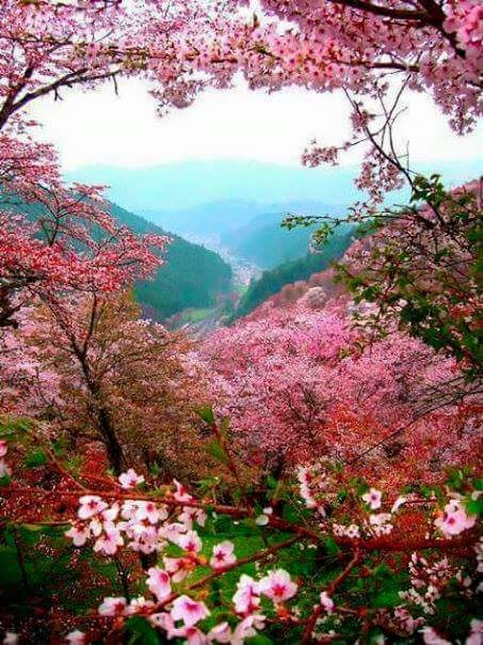 tree, beauty in nature, nature, flower, autumn, scenics, blossom, tranquility, no people, day, travel destinations, branch, springtime, tranquil scene, pink color, outdoors, growth, mountain, leaf, change, freshness, fragility, sky