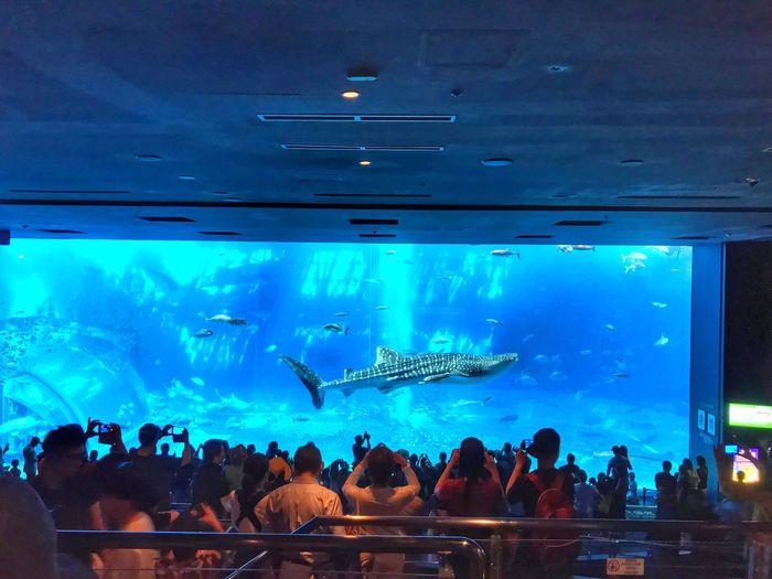 Aquarium Island