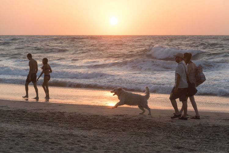 Dog Pets Beach Sea Sand Sunset Border Collie Togetherness Golden Retriever Animal Vacations Domestic Animals Motion Summer Animal Themes Affectionate Sun Outdoors Wave Horizon Over Water The Week On EyeEm